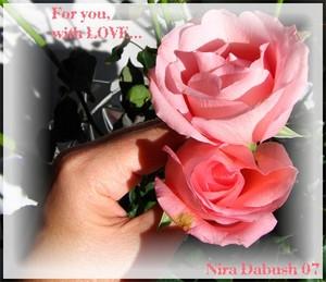 Nira Dabush Portfolio