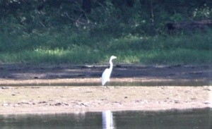a Bird alone