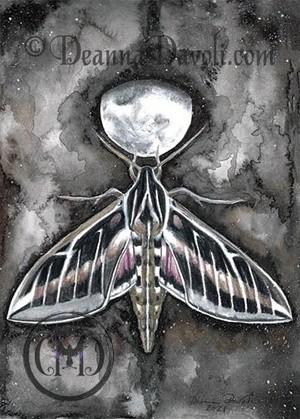 SphinxMoth-CR