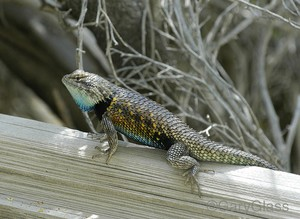 Lizards,Insects and Other Creatures