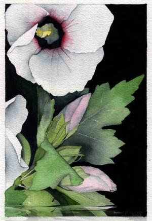 Pencil  /  Watercolor