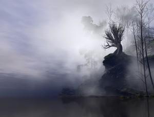 Misty River Bank