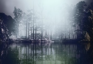 Green Lake And Wood