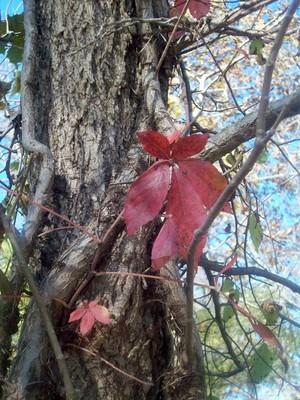 Fall's
