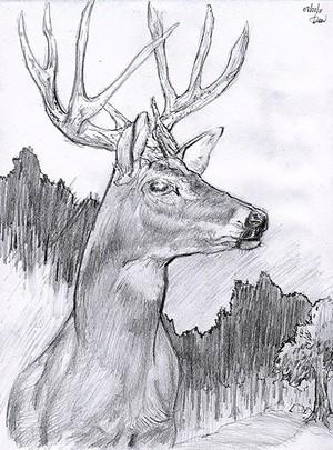 Animals / domestic & wildlife
