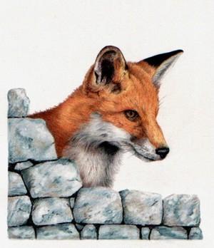 Untitled Fox