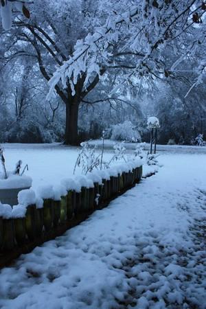 Snowcapped Merlot