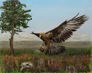 Golden Eagle – Highlands