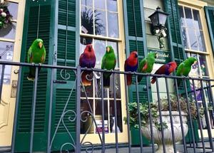 nola birds