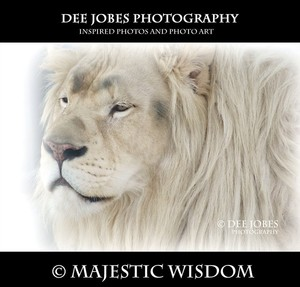 DEE JOBES PHOTOGRAPHY