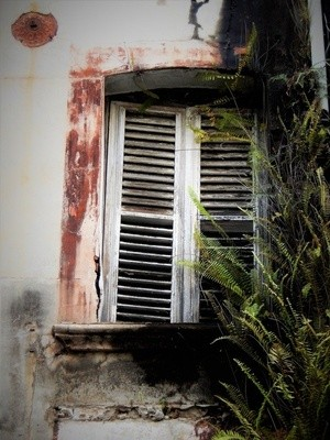 CLOSED FOR EVER ..WINDOW OVERRUN WITH FERNS .