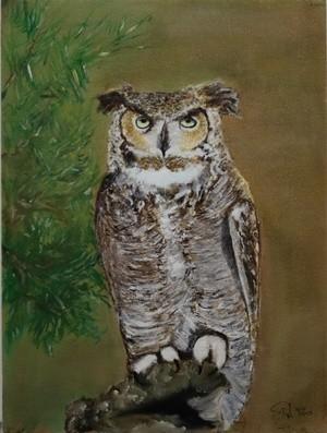 Long-Eared Owl – Woodland