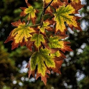 Autumn ~ October 2021