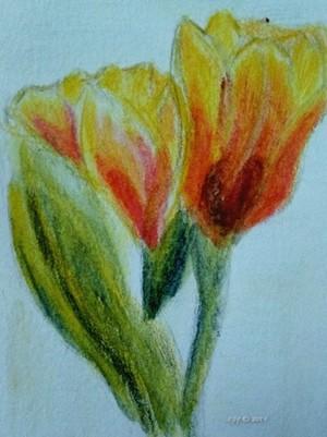 ATC - tulips 071319
