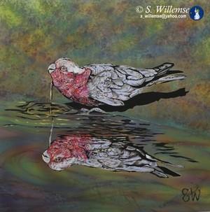Galah reflection: Precious water