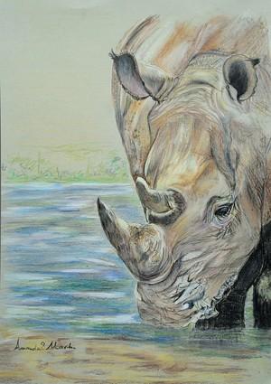 Rhino at the Waterhole