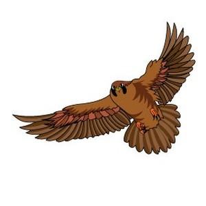 Illustrated Hawk