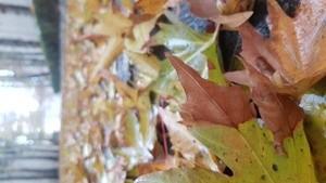 Leaves of trees