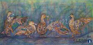 Ducks Wildlife Art Australian Birds Susan Willemse