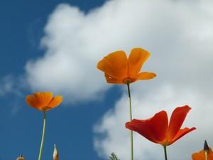 flowers in the skye