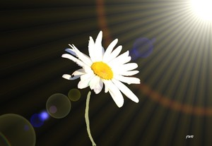 The Warmth Rays of Light