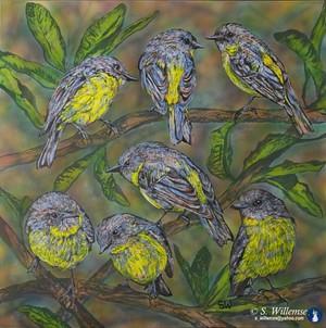 Yellow Robin and banksia Australian bird Art Susan Willemse