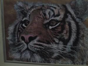 CONTEMPLATION Tiger by Mandy Thomas