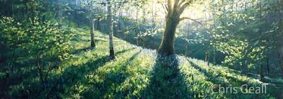Beech tree in spring