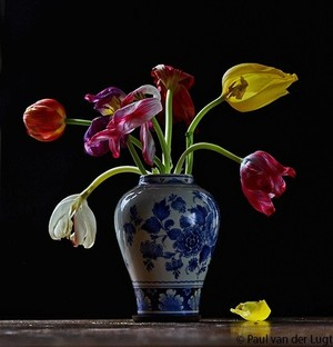 tulips with Delfts Blue vase