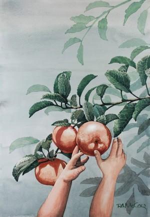 Todays Apple