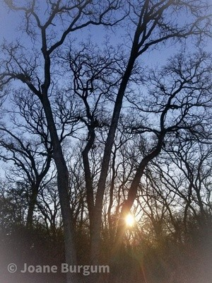 Silhouette Trees and Sun