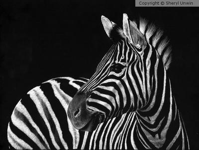 Zebra No. 3