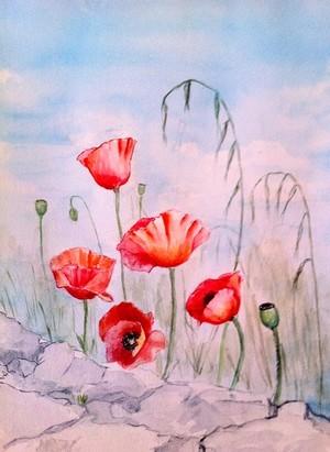 Cretan Poppies
