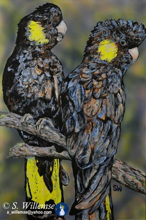 The Girls Black Cockatoos Art Australian Birds Susan Willemse