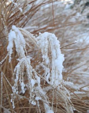Snow on Plant