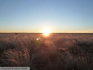 New Mexico Sun 1