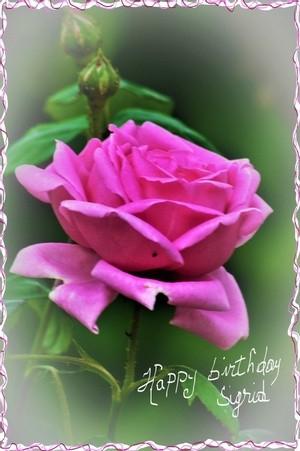HAPPY BIRTHDAY DEAR SIGRID  !!!