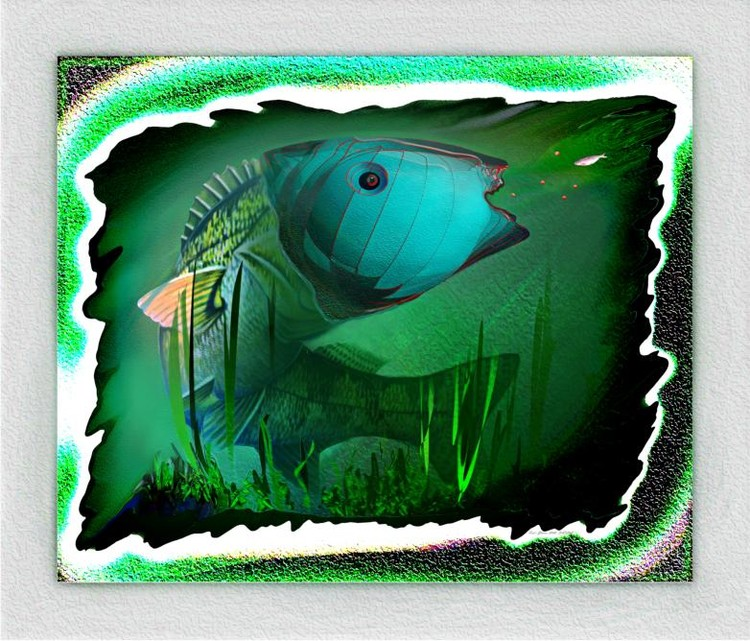 Fish's Glance