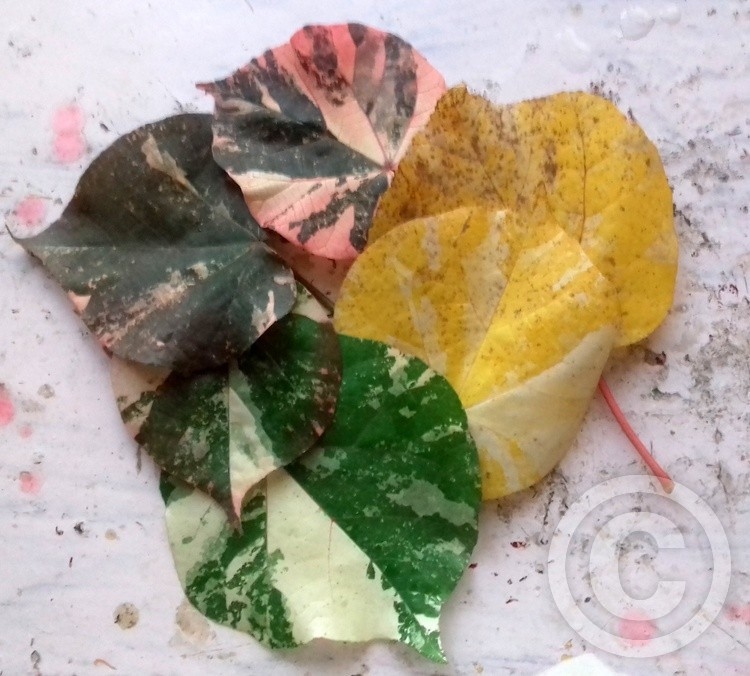 Abstract of Natural Leaves-Colors