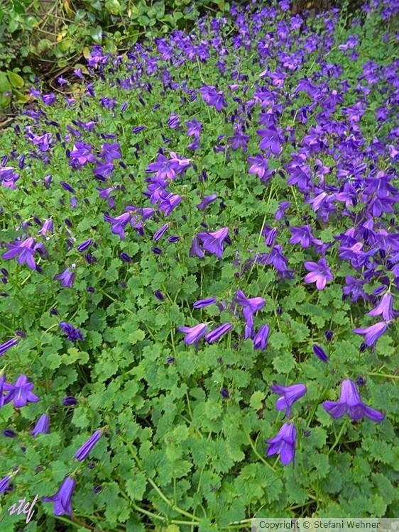 My(ai) garden corner