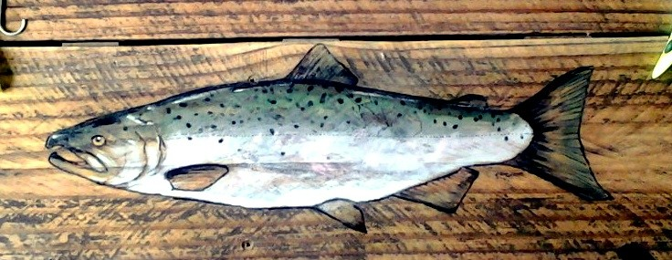 king salmon chinook(3)