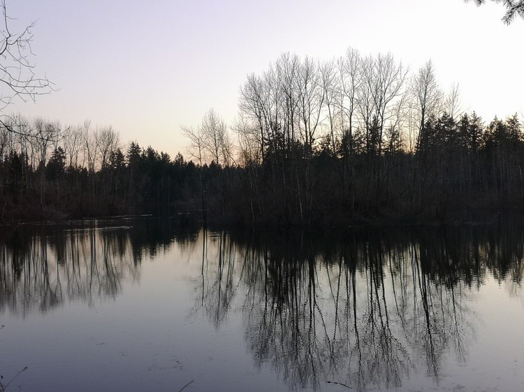 Brookswood Pond