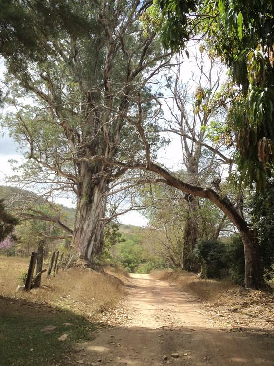 The way to Vagafogo