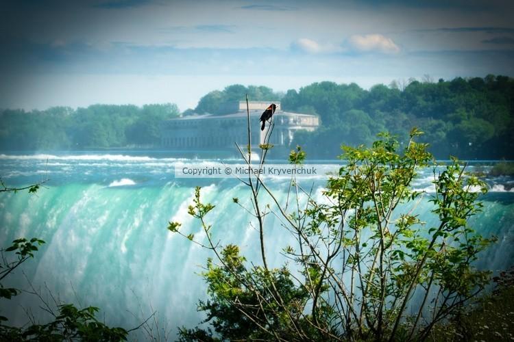 Blackbird at Niagara Falls