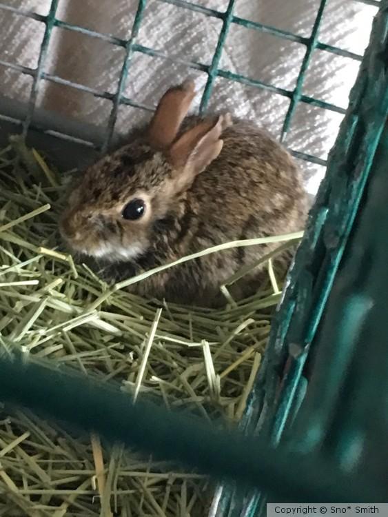 Theadorable bunny