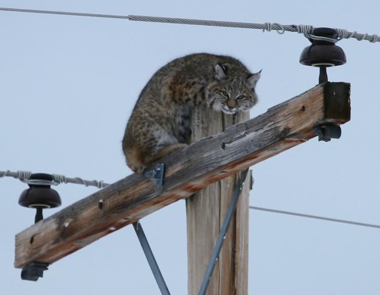 here Kitty Kitty .......hahahahaha
