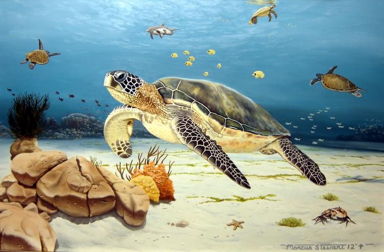 Sea Turtle Jamboree