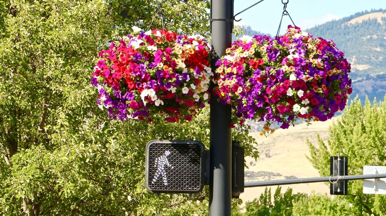Flowers in Traffic