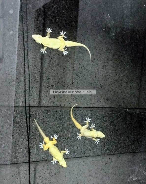 Squamata (scaled reptiles)