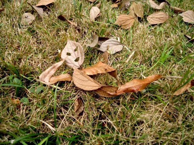 Lying Leaf Man